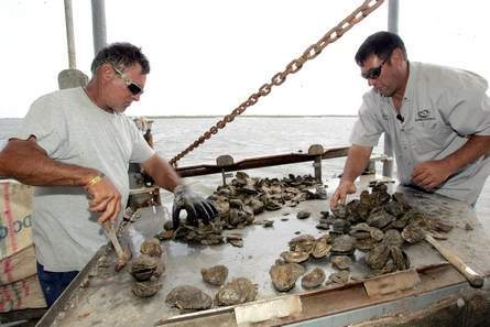 collins oyster co