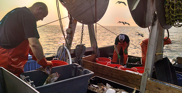 Captain Jim Ford and his crew sort out fish from their first four-hour trawl of the day