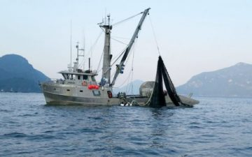Commercial vessel seen fishing for pink salmon near furry for Salmon fishing near me