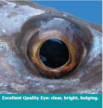 Hake-excellent-quality