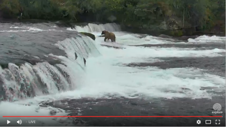 Brooks Falls - Katmai National Park, Alaska