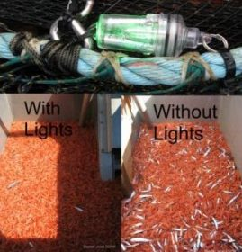 lights bycatch