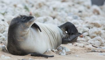 monk-seal-pup-toxo-4-640x371