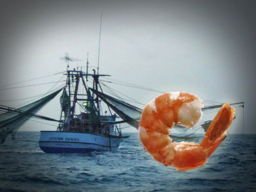 texas shrimpers, restore act money