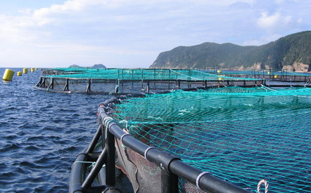 Cooke-aquaculture-Belleoram-NL-s