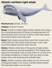 right-whale-stats