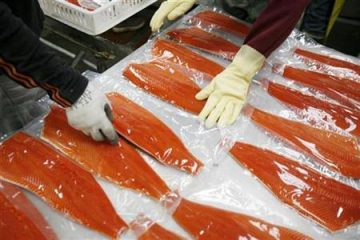 Workers stack Sockeye salmon filets after being vacuum packed to be frozen at the Alitak Cannery in Alitak, Alaska
