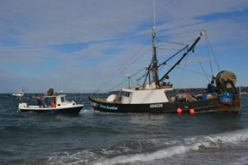 Continuously updated for Miss montauk fishing report
