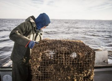 n.c. commercial fishermen needed to help clean up fishing gear in, Reel Combo