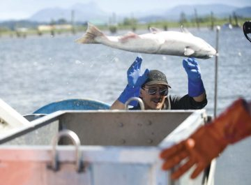 Columbia River Fishing  Bill would limit salmon gillnetters  Commercial fishermen would be limited to side bays, estuaries to protect wild runs
