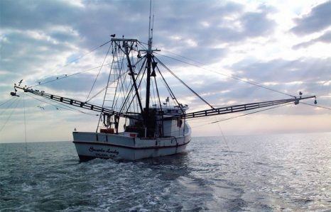 florida shrimp industry analysis Seafood and seafood haccp this report discusses what types of seafood florida this course is intended to assist the seafood industry in developing and.