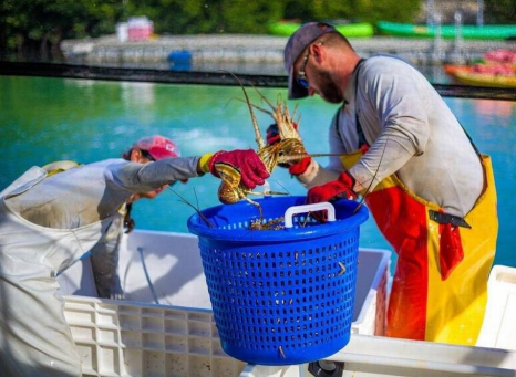 """Hurricane Irma: """"The fishing industry in the Keys is frozen, paralyzed. We're literally in a state of shock,"""""""