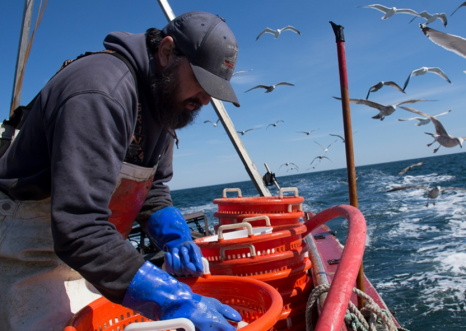 THREATENED – Scallop fishing off the coast of Long Island