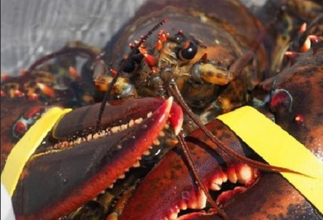 Coronavirus: COVID-19 concerns delays southern N.B. lobster season 1 month, other fisheries scheduled to start on set dates