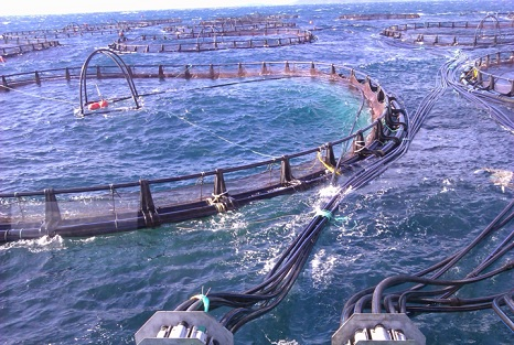 Trump Executive Order Opens the Door for Massive Industrial Fish Farms in Oceans
