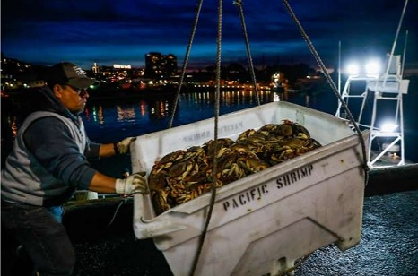 Dungeness crab season might not open for Thanksgiving again