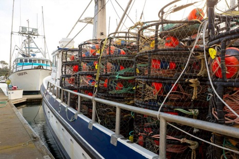 Ropeless fishing gear won't save whales