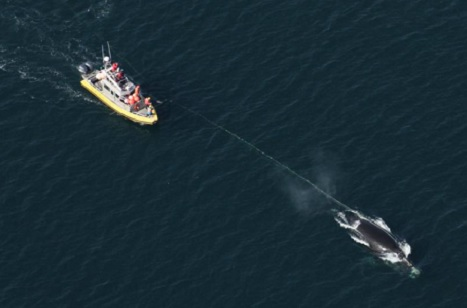 #ShowUsTheRope – Blamed for Right Whale Entanglements, Lobstermen say Show us the rope!