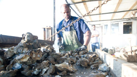 oysters_louisiana-by-shawn-escoffery-crop