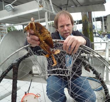 BC crab