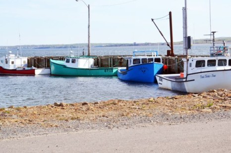 Cape Breton Lobster Glut
