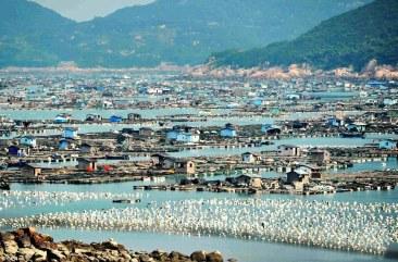 China fish farms