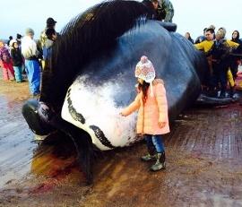 Whaling-Monica-Edwardsen-jpg