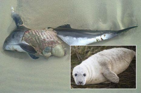 Killer Seals