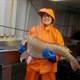 fisheries observer talilla schuster