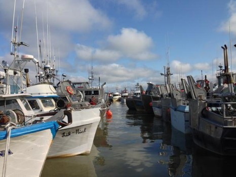 bristol bay fishing report 6-21-15