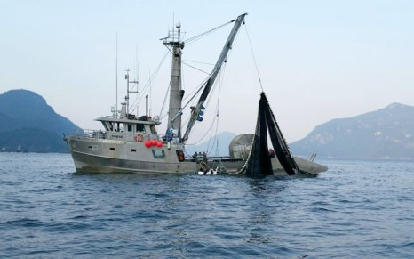 commercial vessel seen fishing for pink salmon near Furry Creek on Wednesday