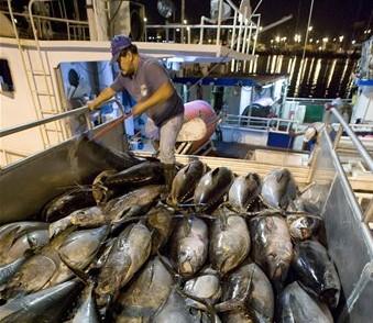 Hawaii Tuna
