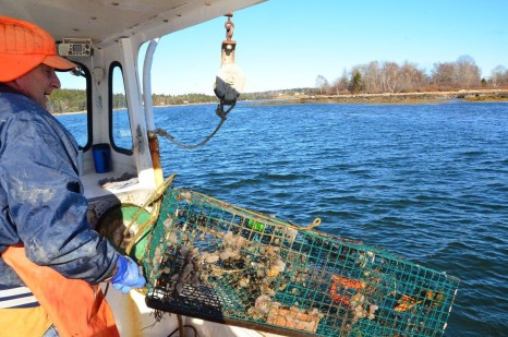 Tunicates-Lobstering-SMR-23-1200x795
