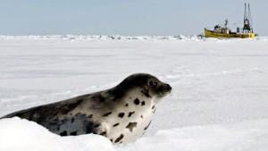 seal-hunt-cp-6204331
