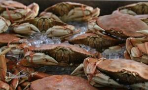 crab_pic