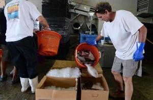 southern flounder chuck liddy
