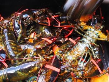 10-lobsters1