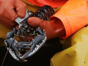 Lobster Fishing - Isle of Tiree