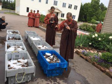 monks-free-lobsters
