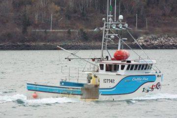 callie-rae-fish-violations