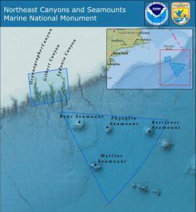 canyons-seamounts