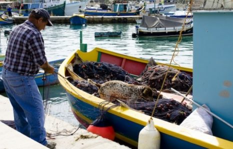 Powerless spectators to the hungry tuna ranchers: the demise of artisanal fishermen