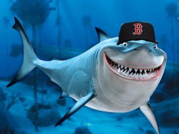 papi-shark