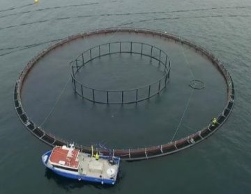 aqua-maof-group-marystown-sea-cages