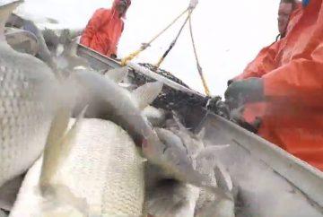 lake-huron-fishery
