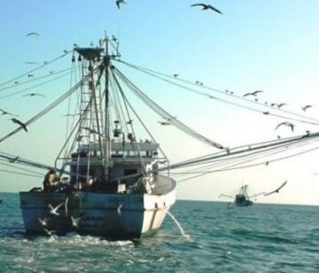 nc-shrimpers