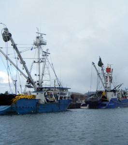 tuna-seiners-265x300