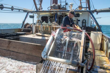 After a record run of squid, local fishermen warily eye competition, regulatory challenges