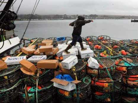 Dungeness crab season under way on the North Coast