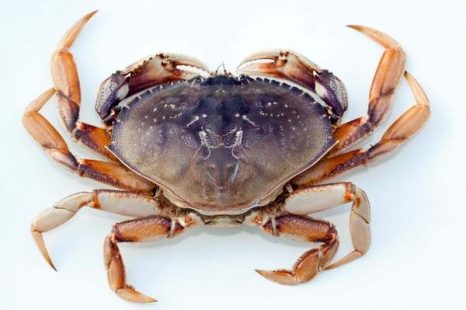 California: Dungeness crab fishermen unite during uncertain times